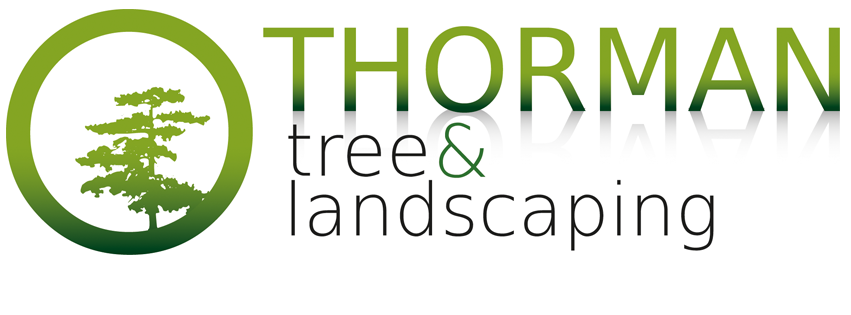 Thorman Tree and Landscaping, Tree Surgery and Landscaping in Anglesey, Bangor and Gwynedd