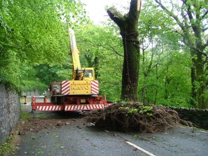 Use of a 30T mobile crane to remove storm damaged trees