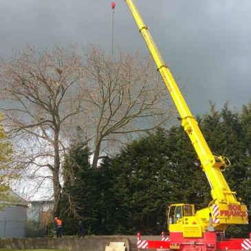 Commercial Tree Surgery in Middlewich