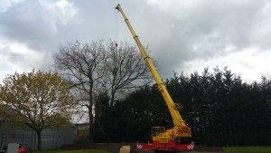 Tree Surgeon attaches the chains